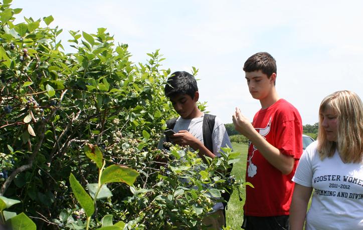Blueberries at Snyder Farm