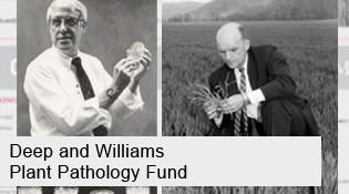 Deep and Williams Fund