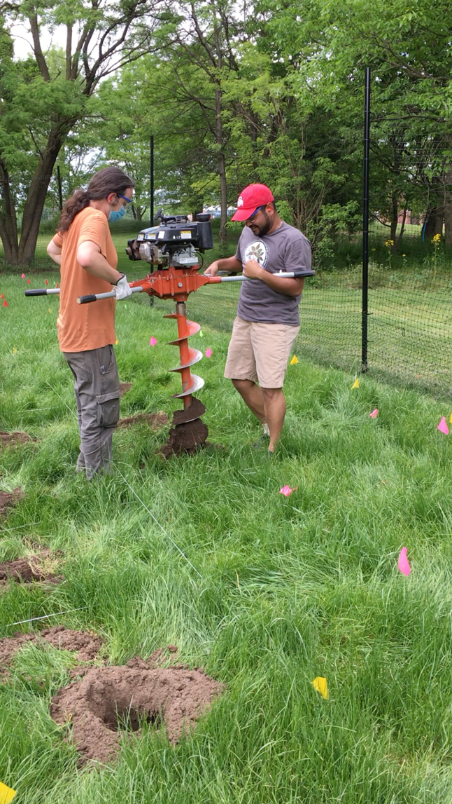 So many holes, so little time…  OSU MS student Caleb Kime and PhD student Soumya Ghosh (Bonello lab) drilling holes to plant trees for the sentinel planting in Columbus, OH in summer 2020.
