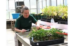 Greenhouse visit with Deloris Veney