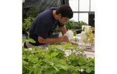 Zak in the greenhouse