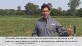 How to Properly Sample for Soybean Cyst Nematode